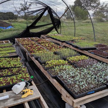 Seedling Nursery