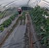 Pest Control Fogger