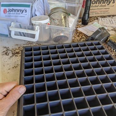 Seedling Starting