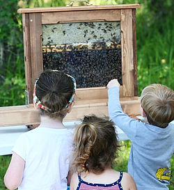 orchard pond bees