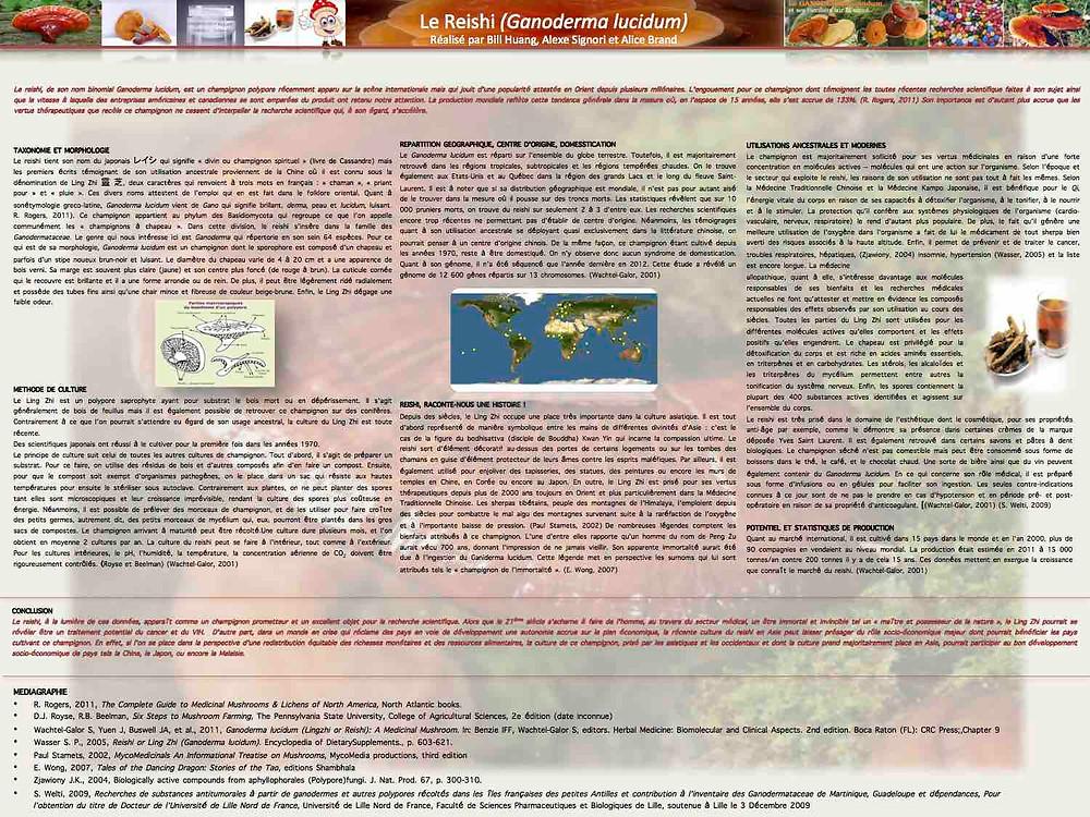 Info sur le Fameux Ganoderma Lucidum (communément appelé Reishi ou Lingzhi)