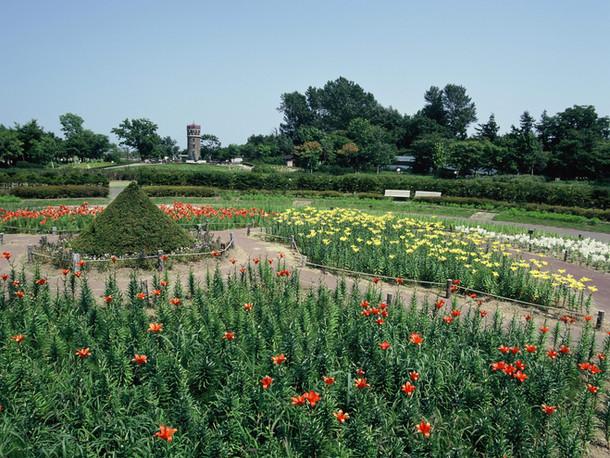 札幌市 百合が原公園