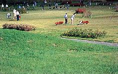 豊平川パークゴルフ場