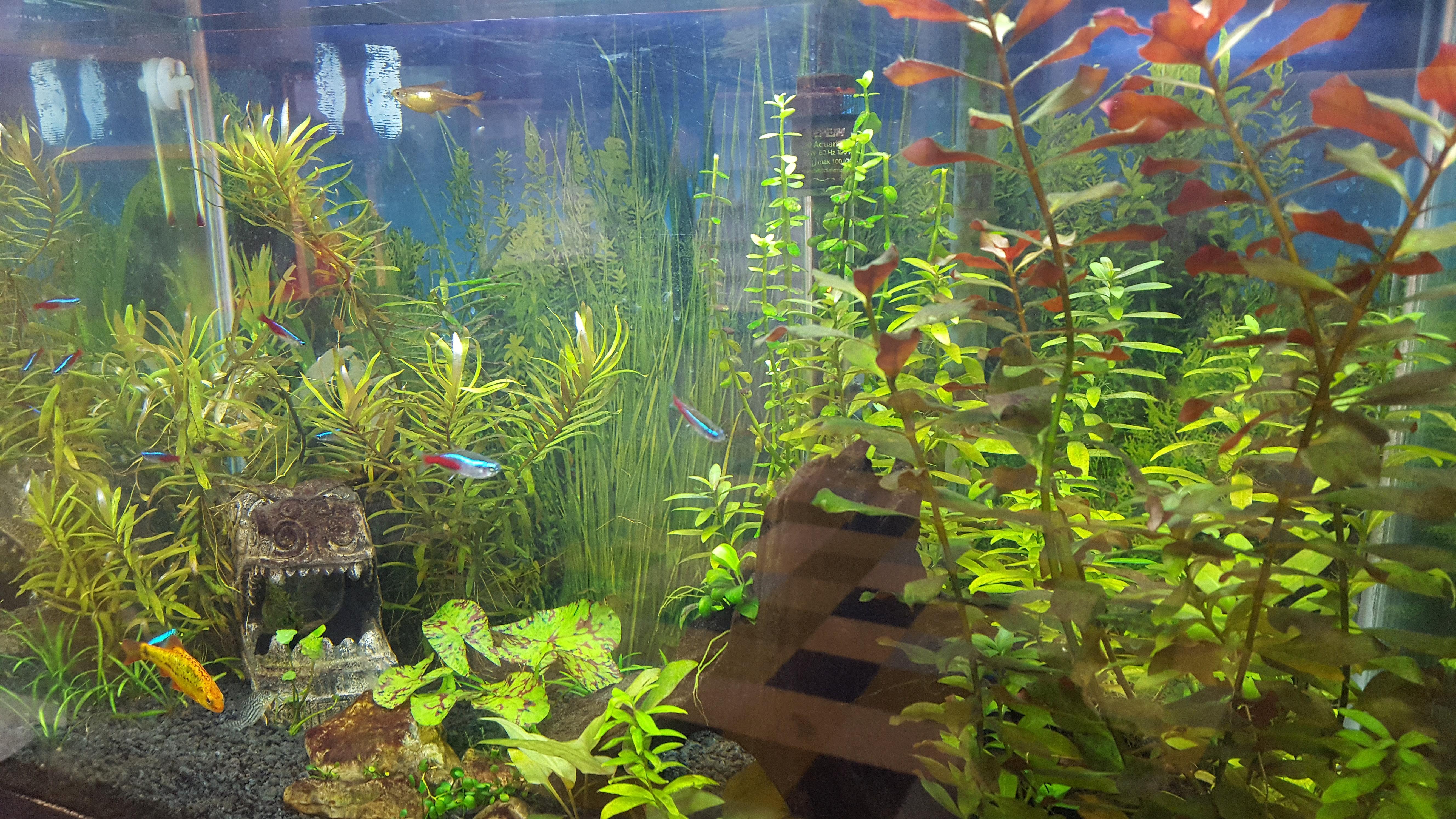 Fish aquarium edmonton - Westmount Discovery Time Preschool Edmonton Our Fish