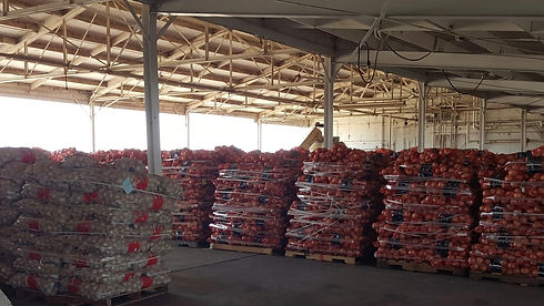 Thomson Land Co Onions.jpg