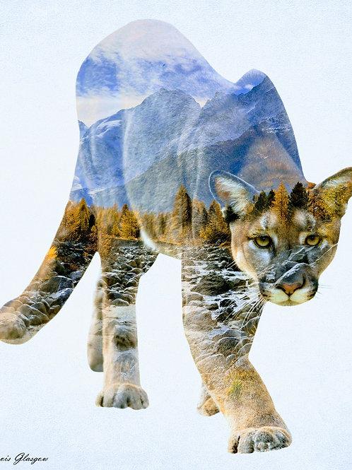 Wildcat (Grand Teton National Park)