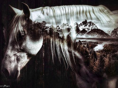Wild Spirit (Grand Teton)