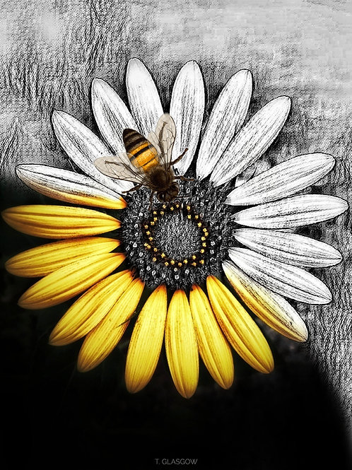 Symbiotic (Bee & Sunflower)