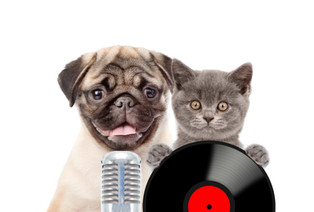 Kitten and puppy singing with microphone