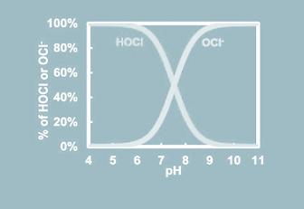 p2-cellwalls (3).png