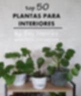 Top 50 plantas para interiores CAPA ETAN