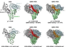 Human Serum Albumin with Ab