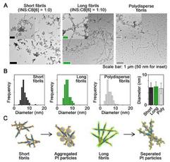 FIbrils with nanoparticles