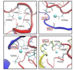 Ca(II) binding sites in aSyn