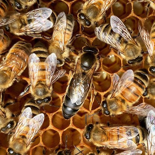 2021 Queen Bee