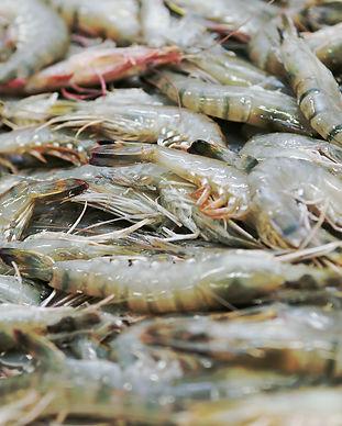 crevettes-black-qwehli.jpg