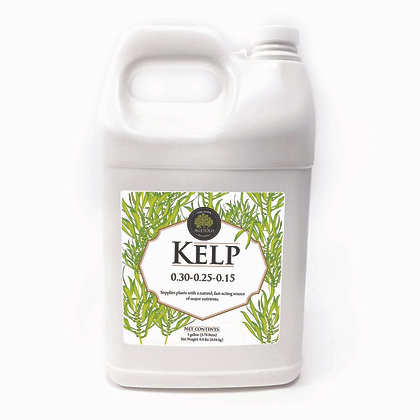 KELP 6 GALLON