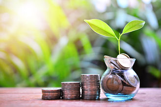 plant money coins saving growth up to pr