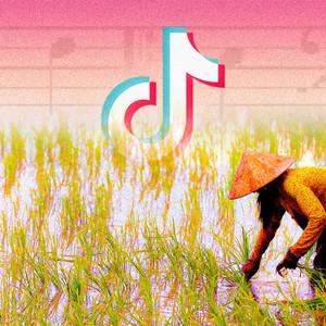 Xu hướng TikTok hiện nay là...nhạc về miền quê Việt Nam?