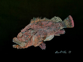 Nohu (scorpion fish)