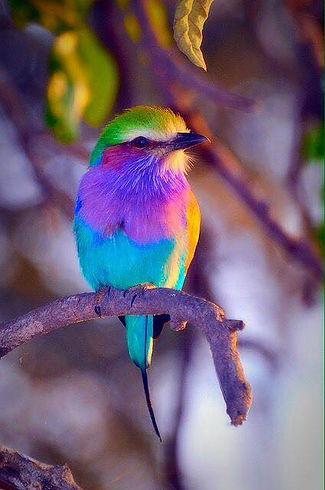 birdrainbow.jpg