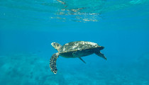 vavea-catamaran-seychelles-tortue-arrièr