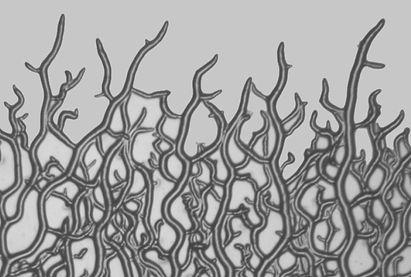 mycelium2.jpg