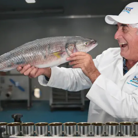 Fremantle fisherman Jim Mendolia goes gourmet with WA wild salmon canning venture
