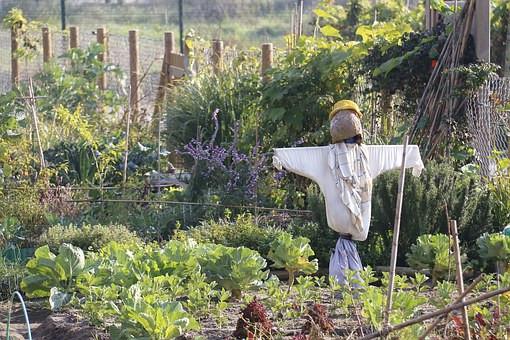 Garden Variety Pests that Hinder Spirit Growth
