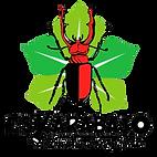 escarabajo.png