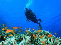 Diving Golfo Aranci