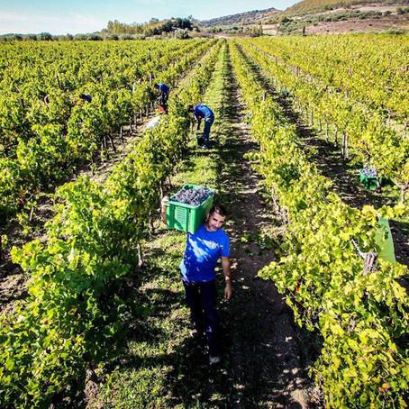 Wine Tasting at Cantina Lilliu