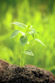 Espaces verts, aménagement de terrain, abattage, élagage