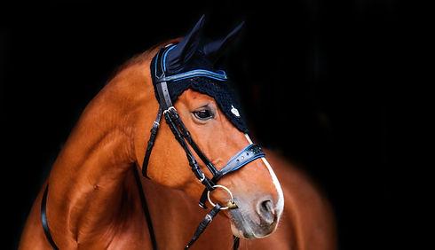 elmont-sellerie-cheval-bridon-neptun