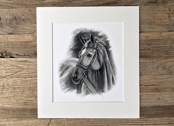 'My best friend's horse'