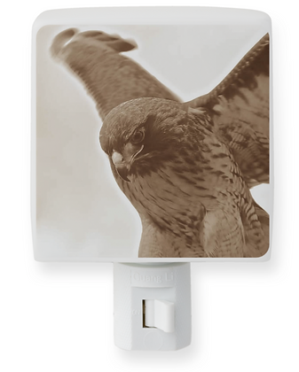 Hawk Night Light