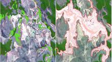 Tragédia em Mariana extinguiu 324 hectares de Mata Atlântica