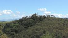 Inea abre processo seletivo para curso de restauração florestal