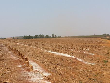 BANPAR se aproxima da marca de 2.000 hectares cadastrados
