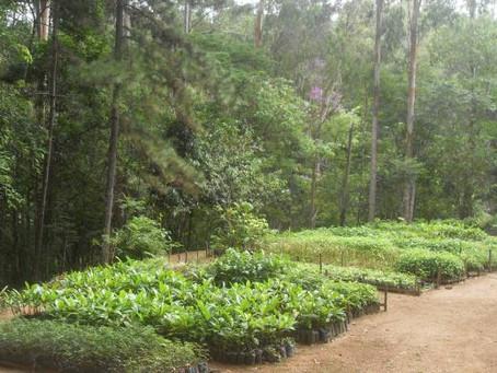 Criada a primeira Floresta Estadual do RJ, em Trajano de Moraes