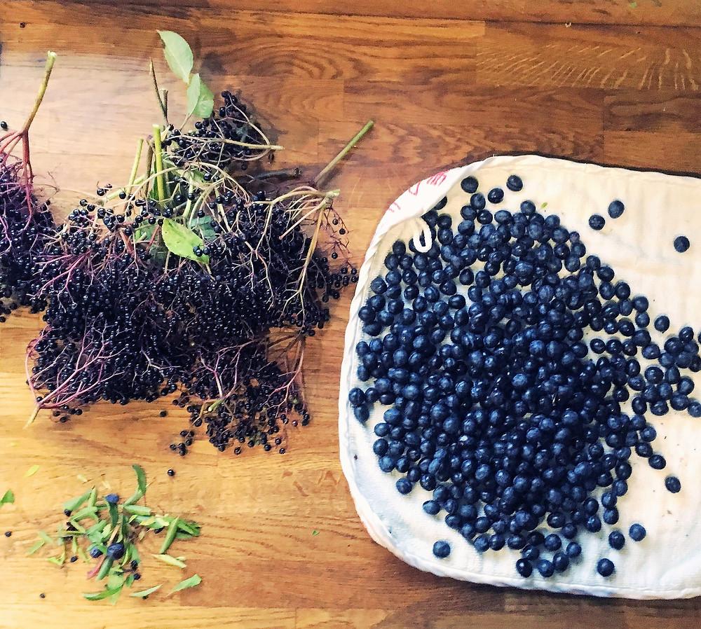 elderberries and sloes