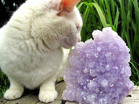 The Best Crystals For Your Pets