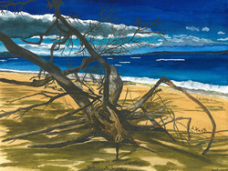 Sharon Hunt - Storms Aftermath