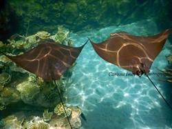 Carissa Imel - Swimming Side by Side