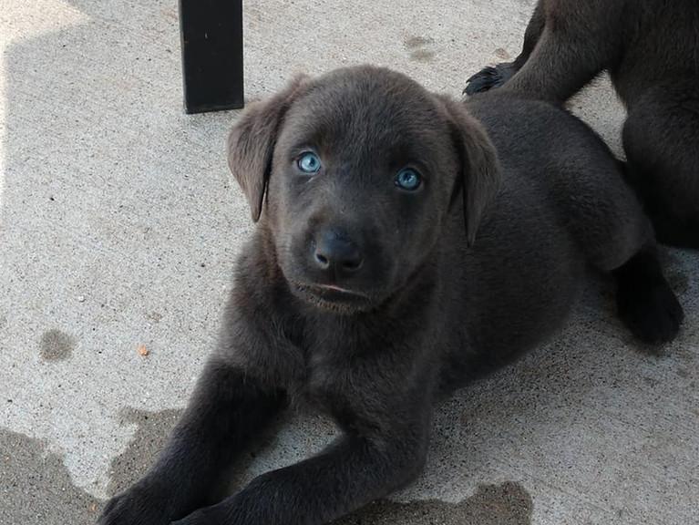 Mezmorizing blue eyes