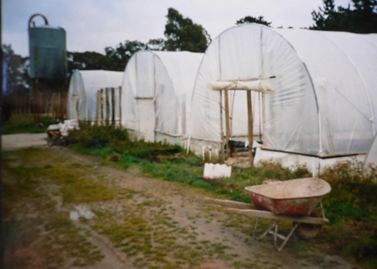 Old Plastic Green House.PNG