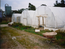 Old Plastic Green House
