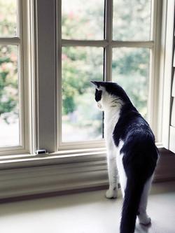 Paw Paparazzi   Pet Photography