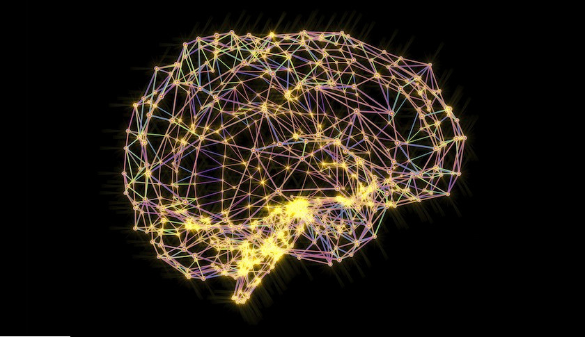 The amazing human brain