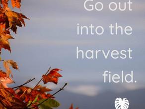 It's Harvest Time!